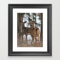 White-Tailed Deer In Win… Framed Art Print