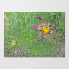 Though you may wilt, you will always be beautiful Canvas Print