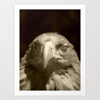 blind eagle 2016 II Art Print