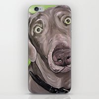 iPhone & iPod Skin featuring Weimaraner  by WOOF Factory