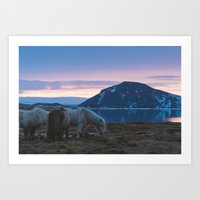 Icelandic Horses and Sunsets Art Print