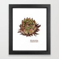 Echeveria Agavoides Framed Art Print
