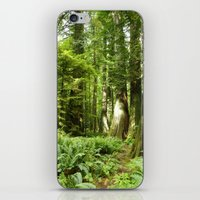 Cathedral Grove iPhone & iPod Skin
