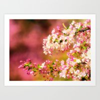 Pretty and Pink crab apple blossoms Art Print