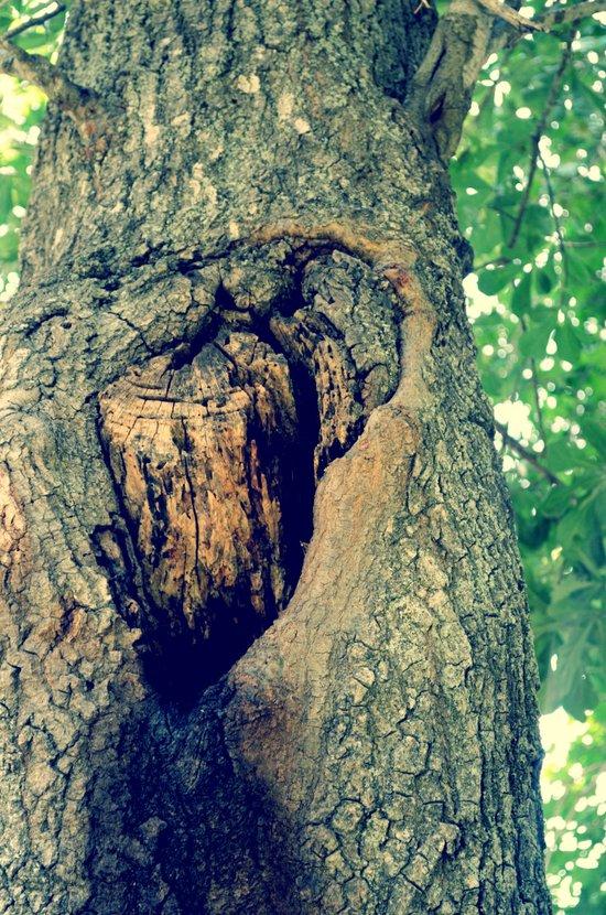treehole Art Print