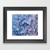 Two Tone Hydrangea Framed Art Print
