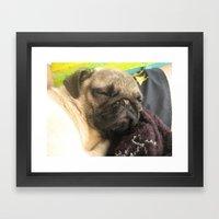Cute Pug Sleeping - hard day at the beach Framed Art Print