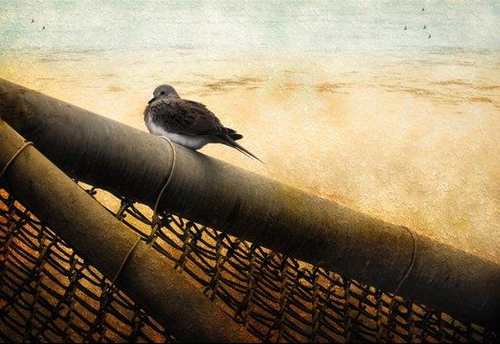Mourning Dove on Beach Art Print