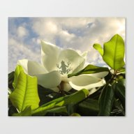 Canvas Print featuring Tree Frog & Magnolia by Spadecaller