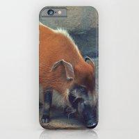 Red River Hog iPhone 6 Slim Case