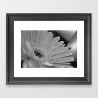 Gerbera Daisy B&W Framed Art Print