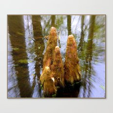 Cypress Monks Canvas Print