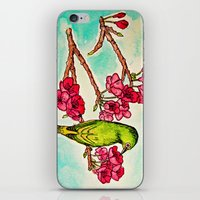 Japanese White-Eye iPhone & iPod Skin