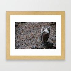 vulture after rainin' Framed Art Print