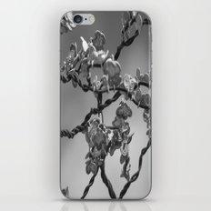 Jason's dogwood iPhone & iPod Skin