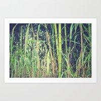 Ubiquitous Bamboo Art Print