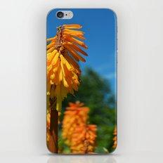 Spots of Orange iPhone & iPod Skin