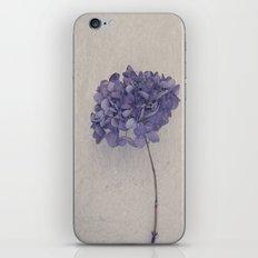Dried Blue Hydrangea II iPhone & iPod Skin