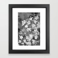 Queen Anne's Lace Wildfl… Framed Art Print