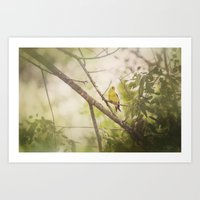 Summer Finch Art Print