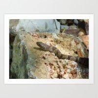 Water Snake VII Art Print