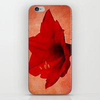 Amaryllis iPhone & iPod Skin