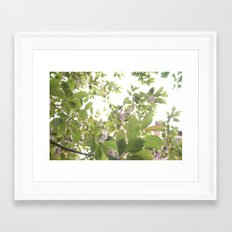 Summer Sky Framed Art Print