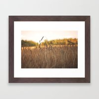 Field of Gold Framed Art Print