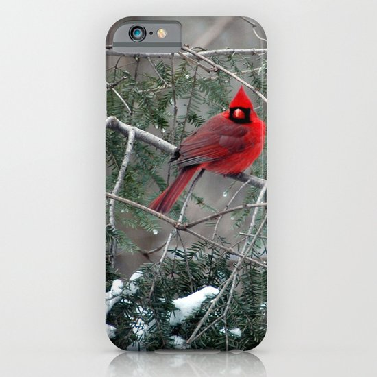 Winter Cardinal iPhone & iPod Case
