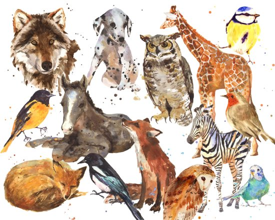 Animal Menagerie Art Print