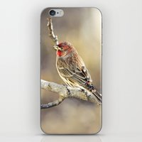 Rosy Little Finch iPhone & iPod Skin