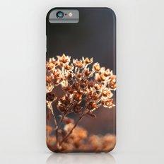 Morning's Light iPhone 6s Slim Case