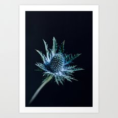 Blue Thistle Art Print