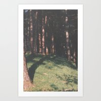Trees In Ullswater Art Print
