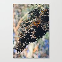 Butterfly Branch Canvas Print