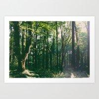 Forest Park Trees Art Print