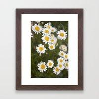Daisies Framed Art Print