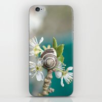 sea snail iPhone & iPod Skin