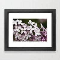 Lilac blossoms Framed Art Print