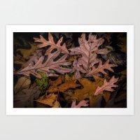 Patterns of Leaves on Wabasis Lake Art Print
