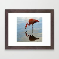 Pink Flamingo   Framed Art Print