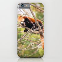 iPhone & iPod Case featuring Nap Time by Starr Cuevas Photography