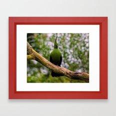 Parrot Framed Art Print