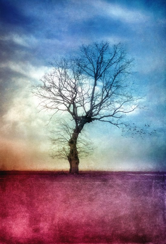 ATMOSPHERIC TREE III Art Print