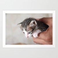 Meow. Art Print