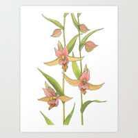 Stream Orchid - Epipacti… Art Print