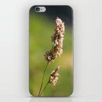 Mountain Grass iPhone & iPod Skin