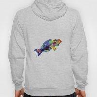 Rainbow parrot fish Hoody