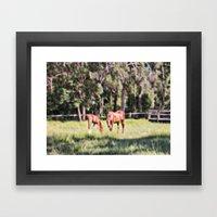 Horse And Foal Feeding I… Framed Art Print