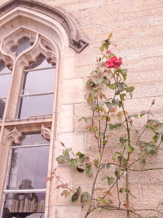 Rose Window Art Print